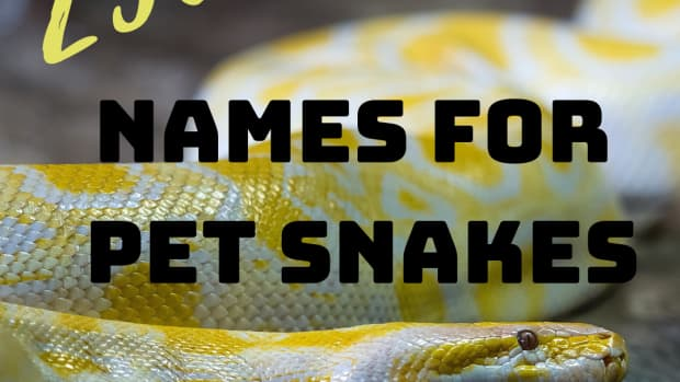 best-funny-ironic-and-badass-pet-snake-names