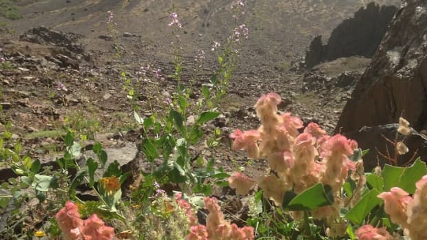 five-dazzling-flowers-of-the-desert