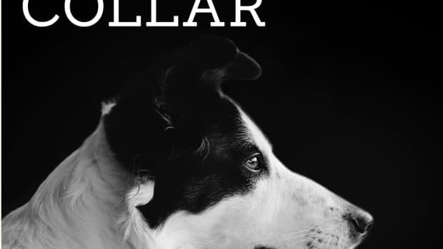 are-dog-shock-collars-harmful-the-dangers-of-e-collar-training