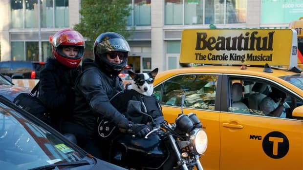 dog-breeds-for-a-motorcyclist