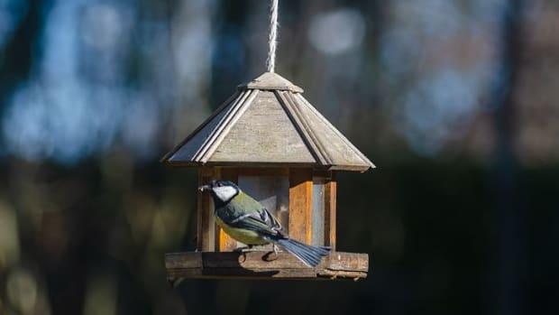 birds-flock-together-in-beautiful-harmony