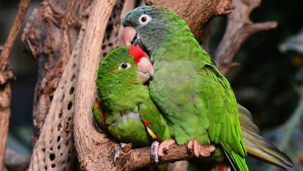 100-best-names-for-lovebirds