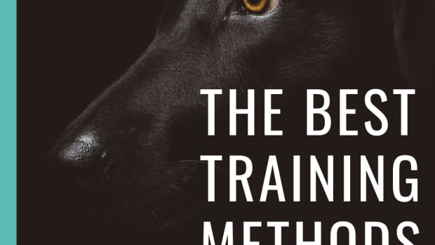 study-reveals-the-best-training-method-for-dogs