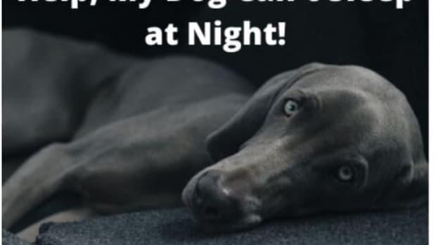 how-to-make-a-dog-sleep-at-night
