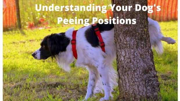 crash-course-on-dog-peeing-positions-and-what-they-mean