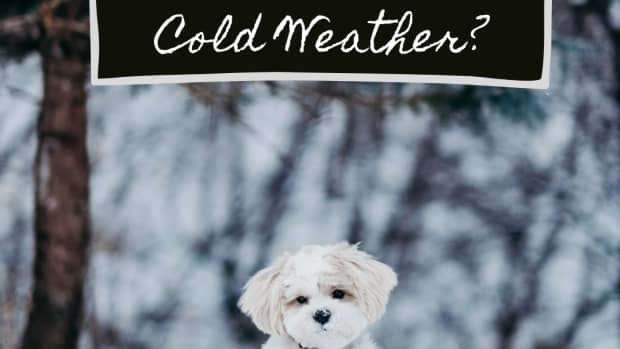 help-my-dog-wont-potty-when-its-cold-outside