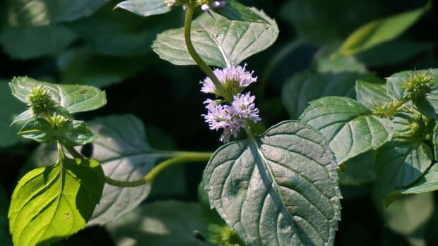 flowers-and-peppermint
