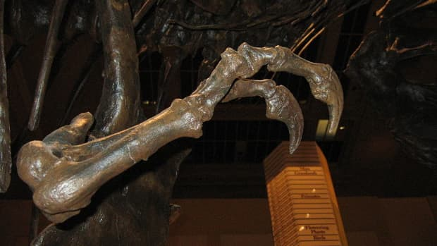 the-purpose-of-t-rexs-tiny-arms