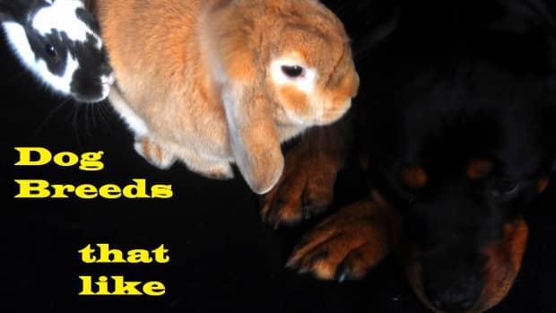 train-dog-accept-rabbit