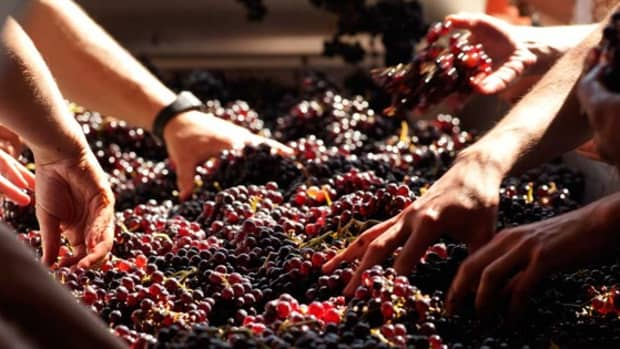 the-environmental-social-and-economic-impacts-of-winemaking