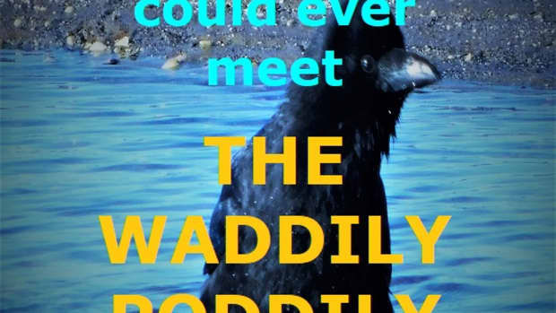 the-waddily-poddily-a-childrens-poem