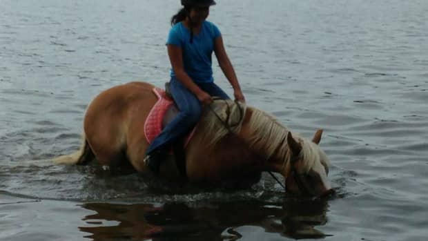 2019-a-new-year-to-do-new-things-with-your-horse