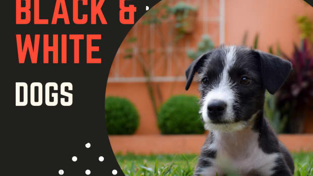 names-for-black-and-white-dogs