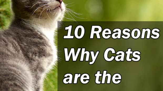 10-reasons-why-cats-are-the-best-pets