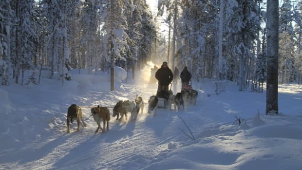 lapland-adventures-husky-sledding-in-the-forest