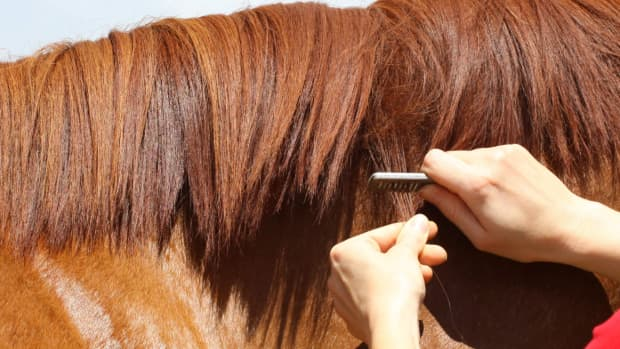 do-you-have-a-horse-that-hates-mane-pulling