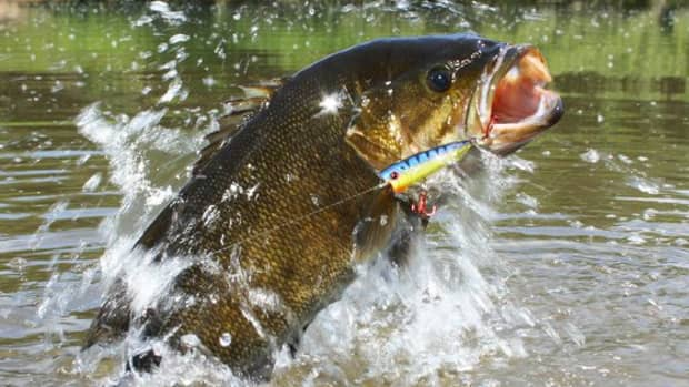 tips-for-river-smallmouth-fishing-without-a-boat