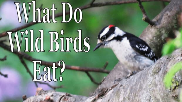 what-do-wild-birds-eat-in-the-summer-and-winter