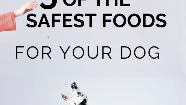 5-dog-foods-that-have-never-been-recalled-and-wont-put-your-dog-at-risk-of-heart-disease