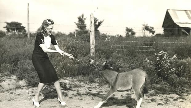 "Original Short Story: ""Sylvia's Sister Mule"""