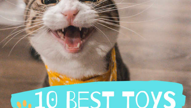 the-top-rated-toy-gifts-for-cats