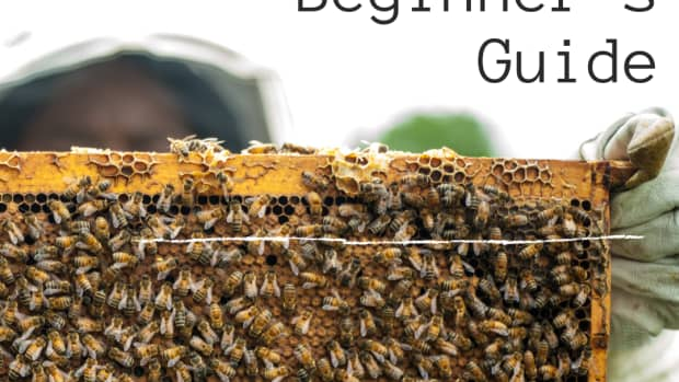 beginners-guide-to-set-up-a-beehive