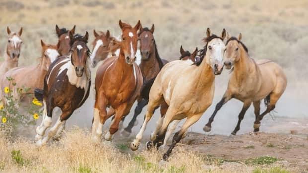 being-a-wild-horse