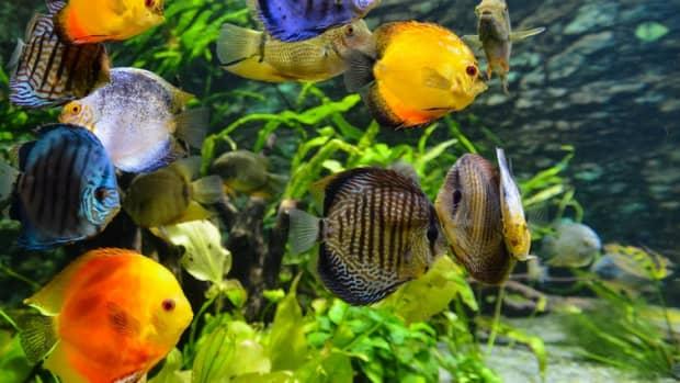 how-to-maintain-an-aquariums-nitrogen-cycle