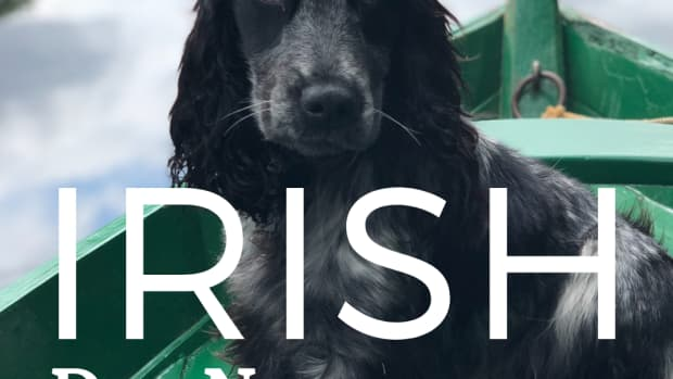 200-lucky-irish-dog-names-for-male-and-female-dogs