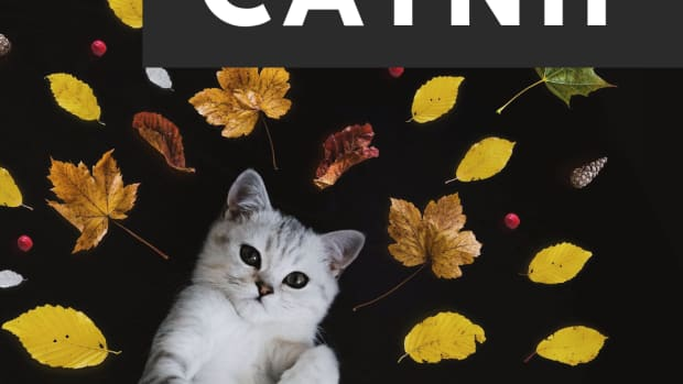 how-does-catnip-work-and-do-cats-like-it