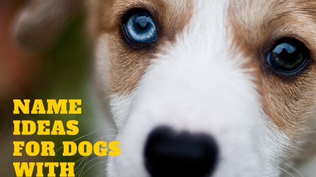 names-for-dogs-with-different-colored-eyes-heterochromia