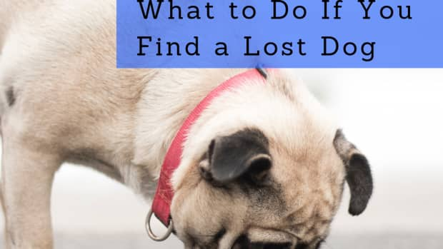 what-to-do-if-you-find-a-lost-dog-or-stray