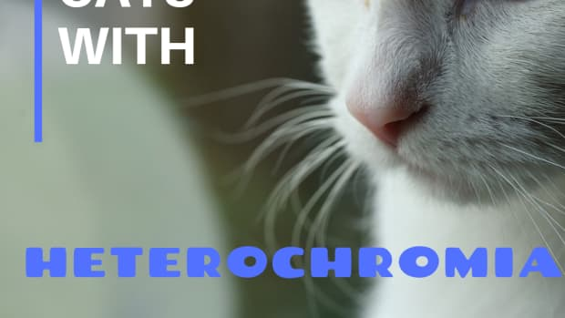 names-for-cats-with-2-different-colored-eyes-heterochromia