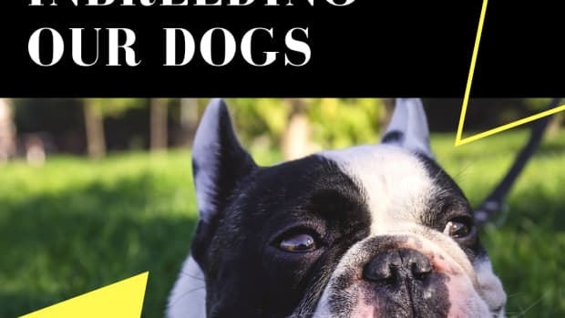 how-to-get-a-healthy-dog