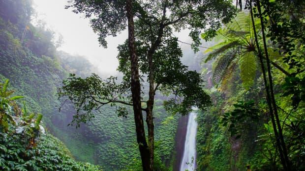 什么控制着雨林的位置