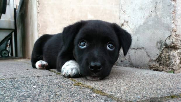 250-unique-black-dog-names-and-meanings