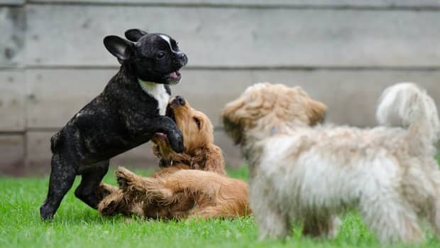 140-most-popular-dog-names-for-your-male-or-female-puppy-with-meanings