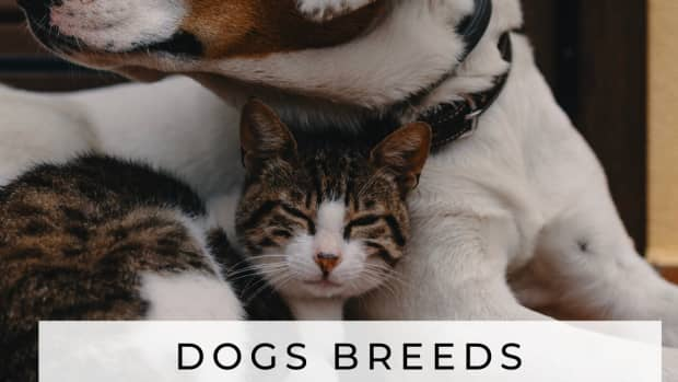 dogs-that-like-cats