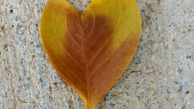 lucky-leaf