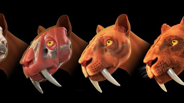 prehistoric-kitty-the-saber-tooth-tiger
