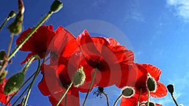 on-the-11th-of-the-11th-say-lest-we-forget