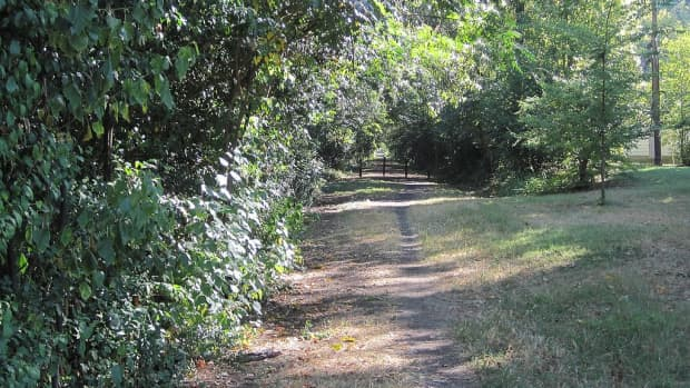 urban-trails-exercise-and-get-back-to-nature