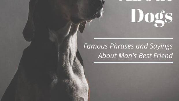 dog-quotations-inspired-by-canine-companions