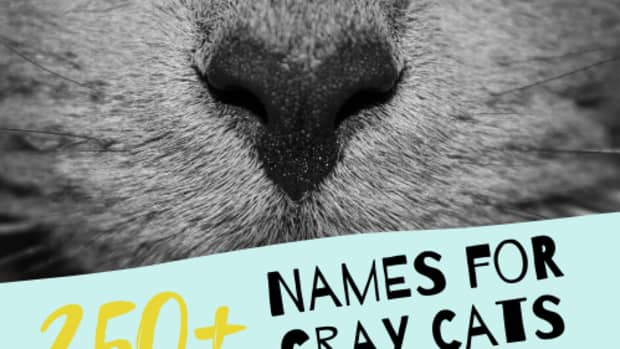 best-names-for-gray-cats-with-white-paws-bluegreen-eyes