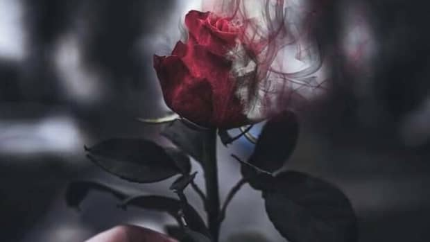 red-roses-are-my-poem