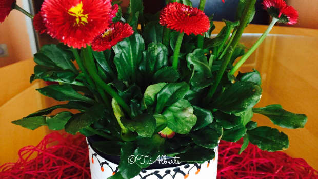 how-to-recycle-an-empty-can-as-a-flower-planter