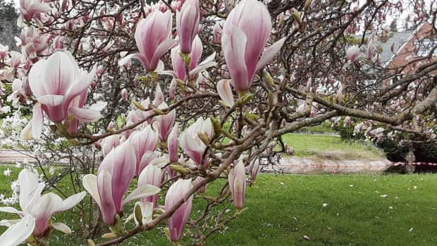the-winsome-smile-of-spring