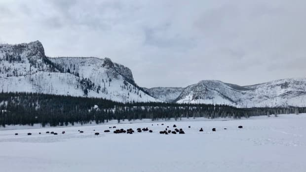 winter-in-yellowstone