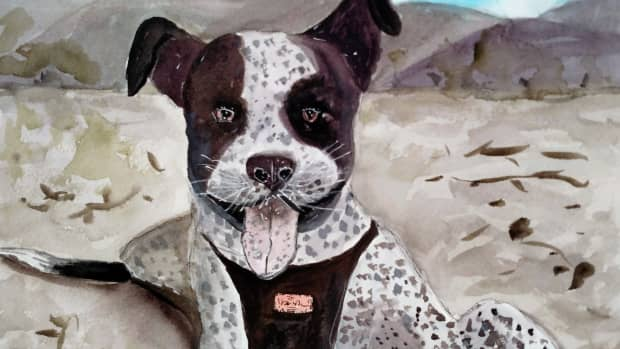 beachdog