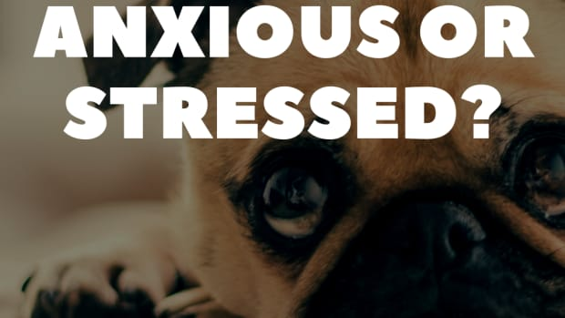 dogs-anxiety-stress